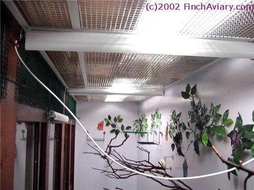 Finch Aviary - Accesso...